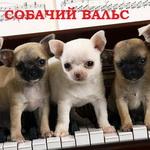 Собачий вальс ноты